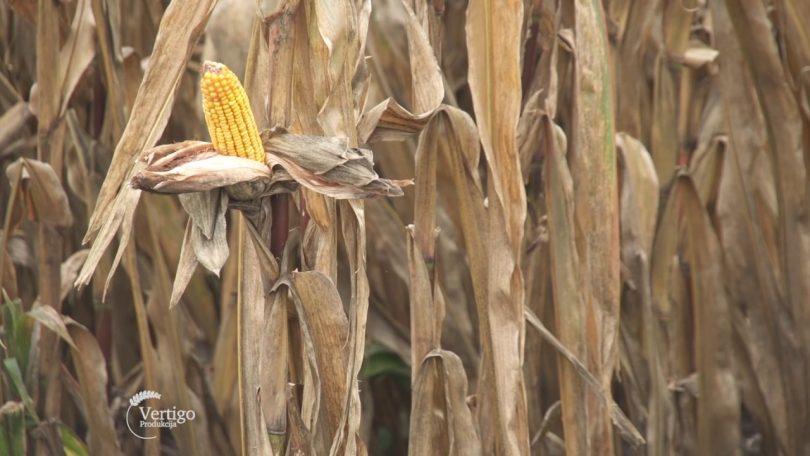 Kako je biti mlad poljoprivrednik u našoj opštini? (VIDEO)