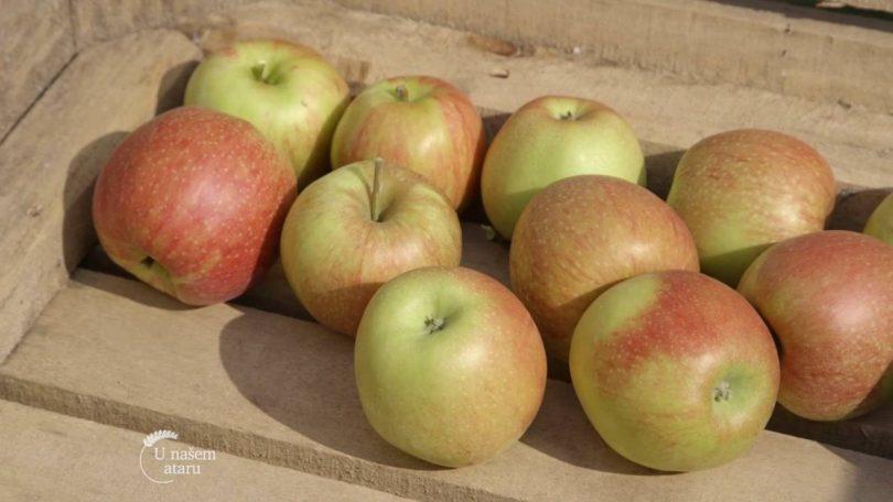 Savremena proizvodnja jabuka