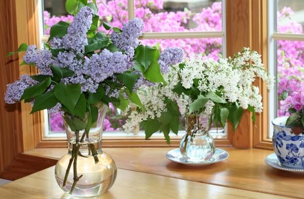 Sutra slavimo Cveti: Obavezno uberite cvet