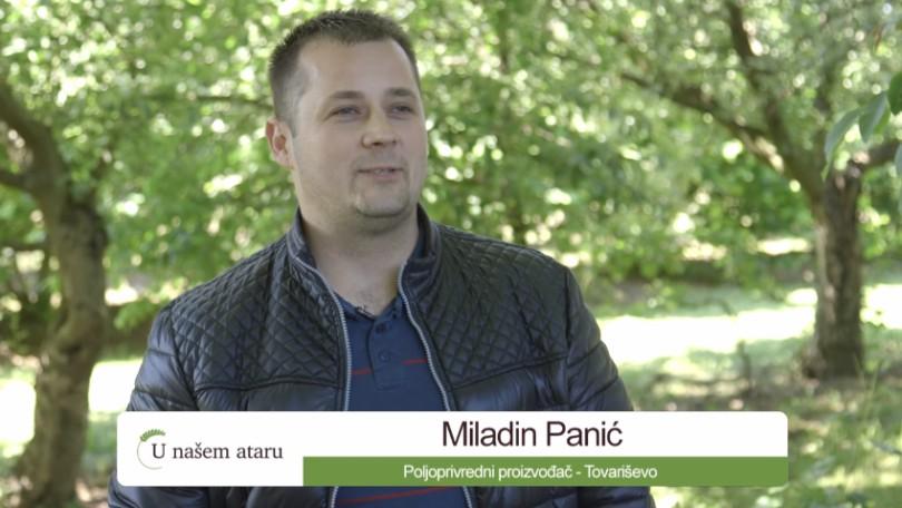 Miladin Panić o proizvodnji lešnika