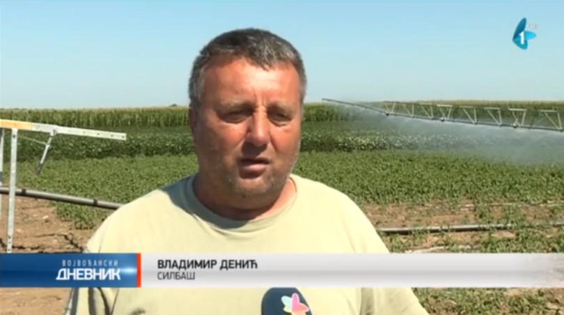 Navodnjavanje blagodet za vreme suše (VIDEO)