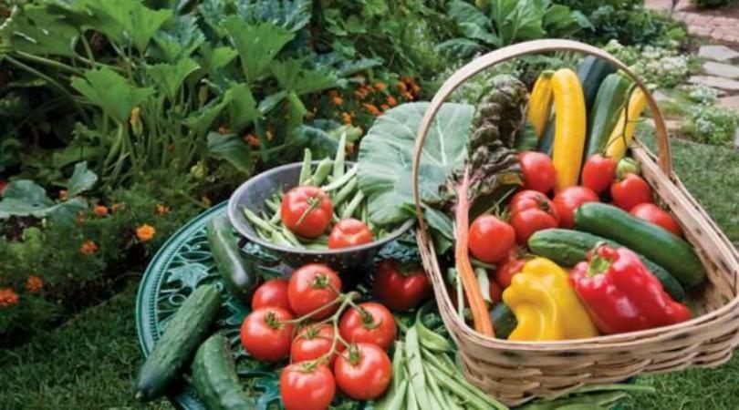 Treninzi za oko stotinu mladih poljoprivrednika ove godine u Selenči