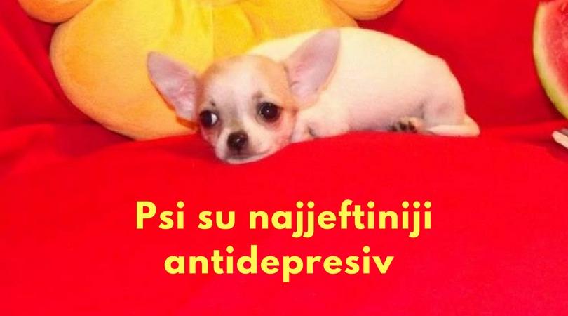 Psi su najjeftiniji antidepresiv koji nema neželjenih dejstava