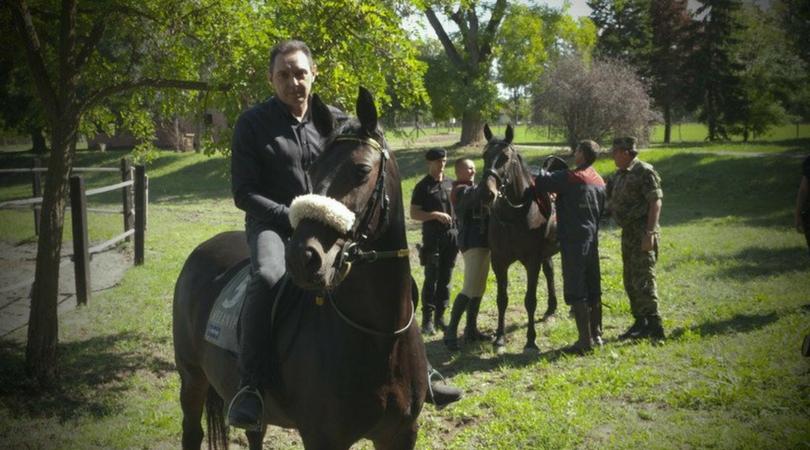 Ujedinjeni Arapski Emirati poklonili ergeli Karađorđevo 15 konja