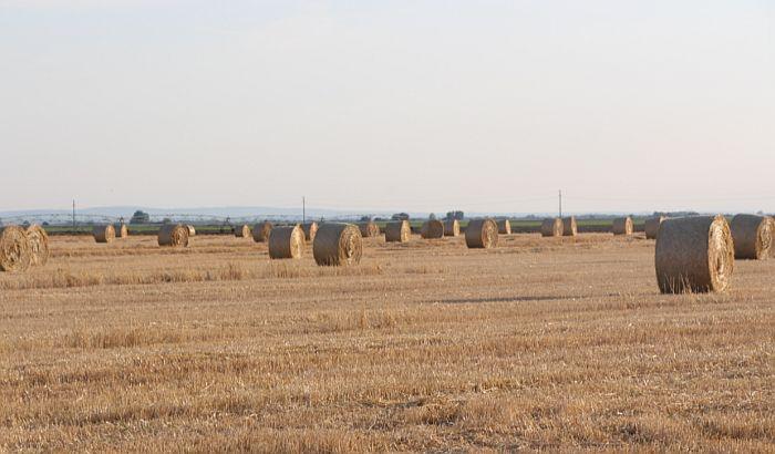 Vojvođanske oranice tri puta skuplje od zemljišta na jugu