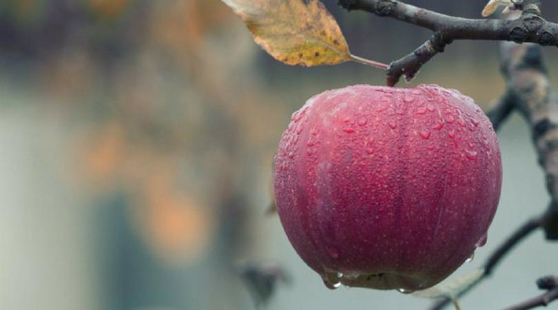 """""""Nektar"""" zakupio 135 hektara voćnjaka"""