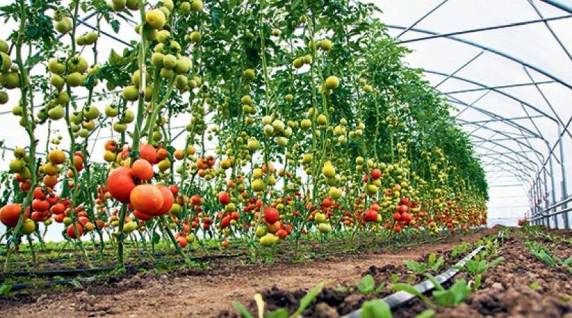 Povrtari treba da proizvode rano povrće