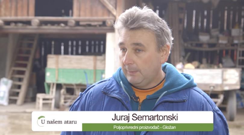 Povrtarska proizvodnja u Gložanu (VIDEO)