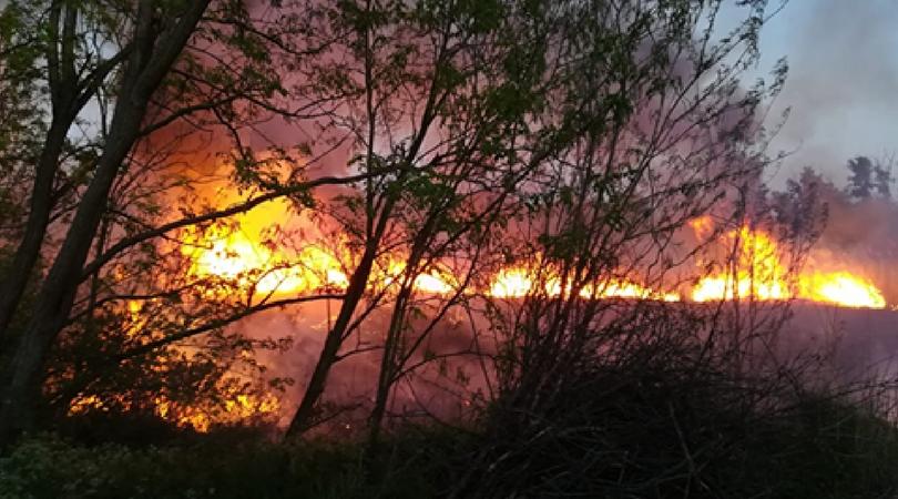 Požar u Bačkom Petrovcu (VIDEO)