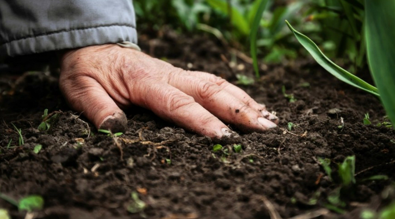 Kakva je bila 2019. godina iz ugla poljoprivrednika?