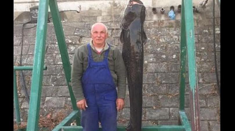 Novosađanin upecao soma od 80 kilograma kod Žeželjevog mosta
