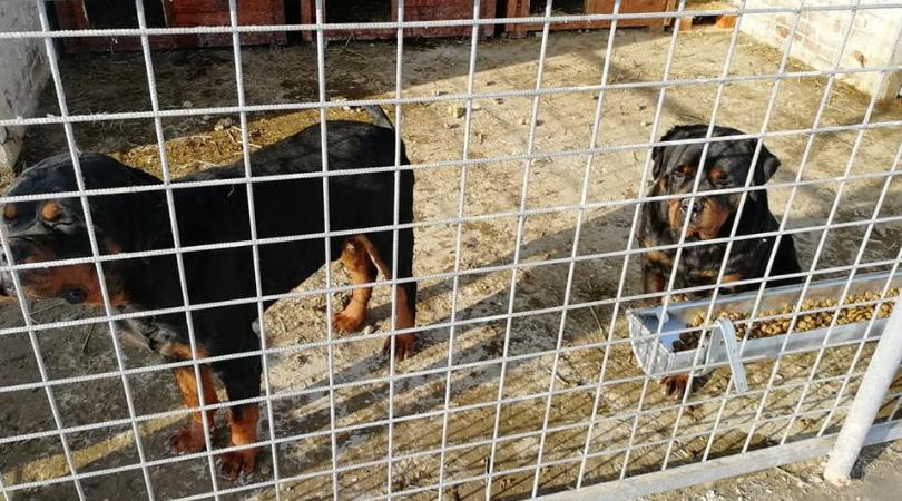 Prihvatilište za pse u Novoj Gajdobri je opet u funkciji (FOTO)