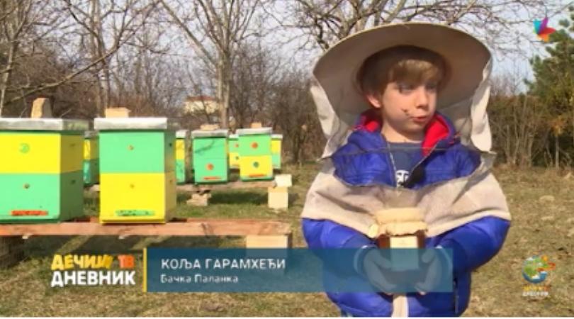 Najmlađi pčelar iz Bačke Palanke – Kolja Garamheđi (VIDEO)