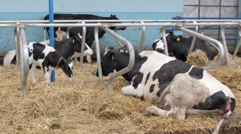 Srbija prošle godine duplirala izvoz goveđeg mesa
