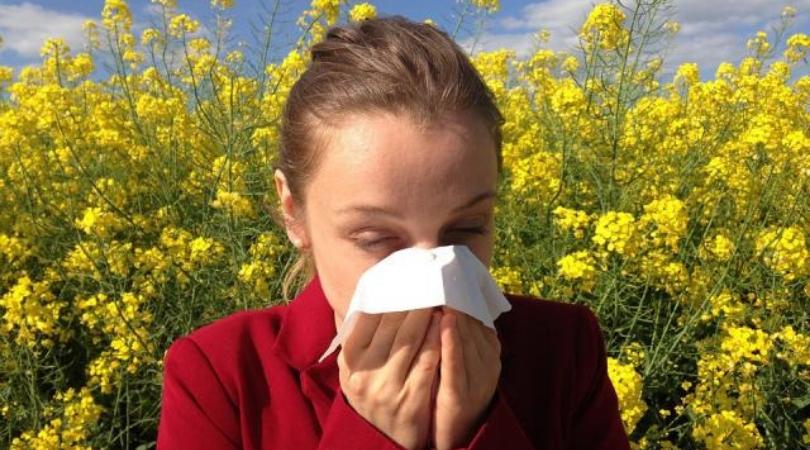 Krenulo cvetanje, aktuelan polen drveća
