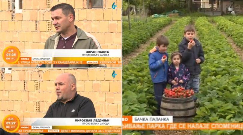 Dobri odnosi dve komšijske porodice i jagode (VIDEO)