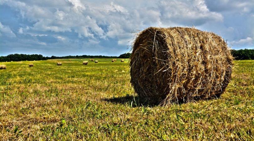 Raspisan konkurs za dodelu subvencija za investicije u poljoprivredi