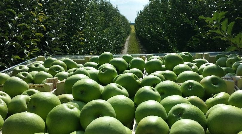 Uz jabuke i šljive