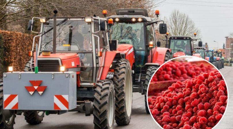 Zašto srpski poljoprivrednici bacaju svoje proizvode – gde je ključ problema