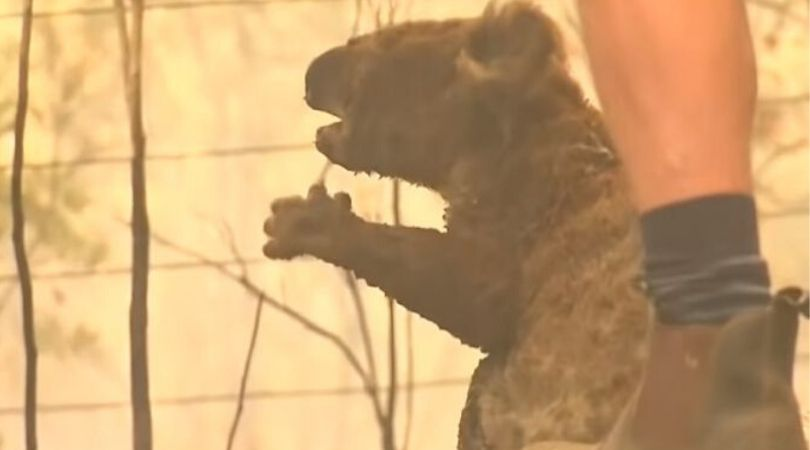 Milioni životinja stradalo u australijskim požarima, zabrinutost da su neke vrste izumrle