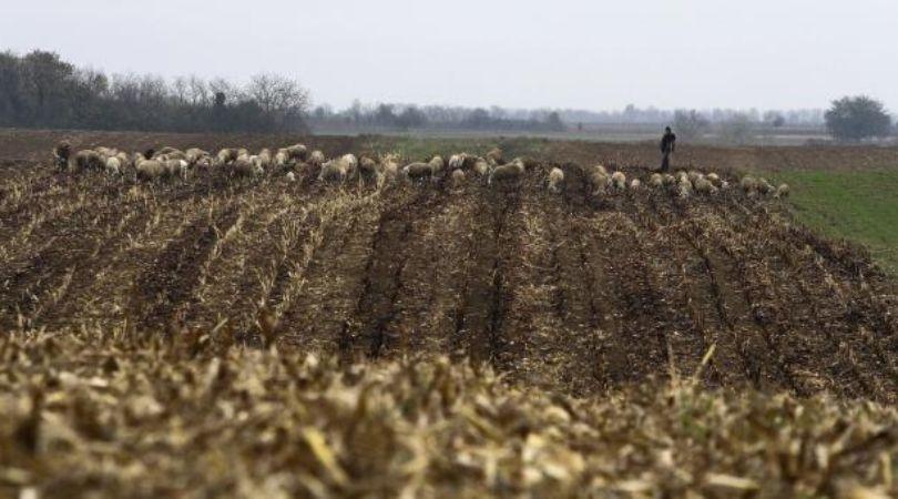 U varoši stanuju, a od sela žive: Tranzicioni ćar vraćen u plodnu zemlju
