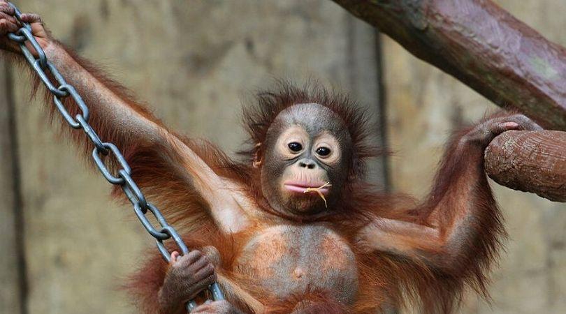 Nemačka, tragedija i životinje: Požar u zoološkom vrtu – stradali majmuni