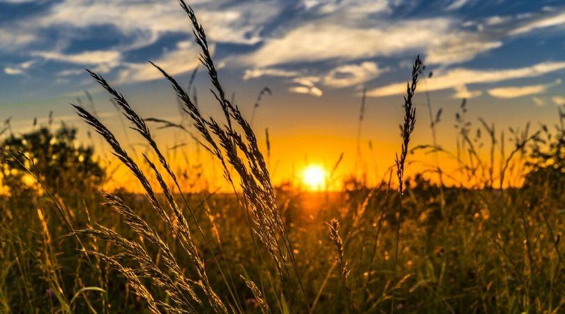 Novi konkursi Pokrajinskog fonda za razvoj poljoprivrede