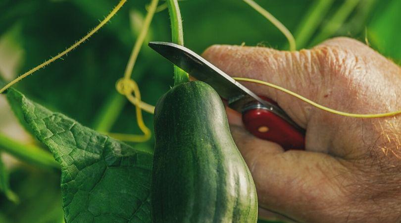 Kako organizovati proizvodnju povrća u bašti za jednu porodicu?
