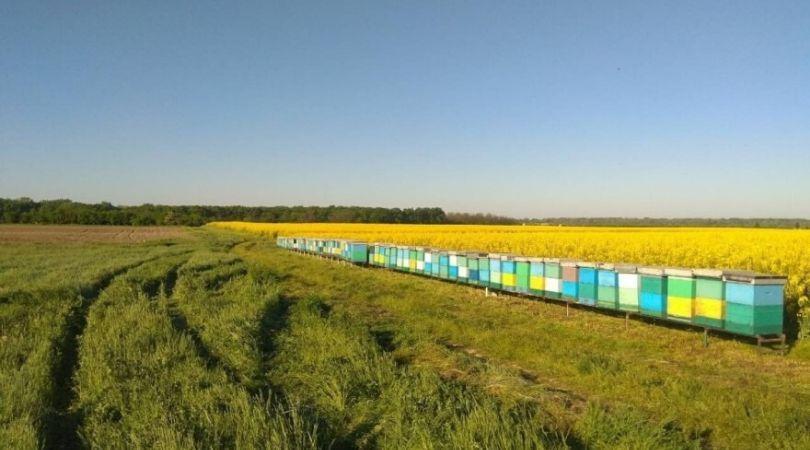 Preko granice do pčelinjaka?