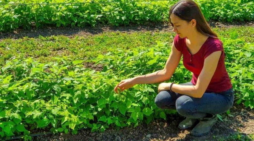 Studentkinja koja ima svoju baštu, sakuplja lekovito bilje i gljive – pravi i sapune