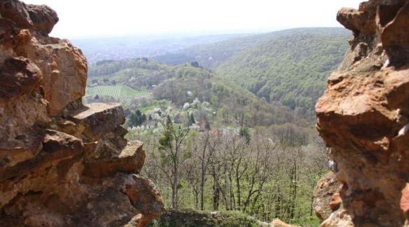 Fruška gora: Priroda u restartu tokom vanrednog stanja