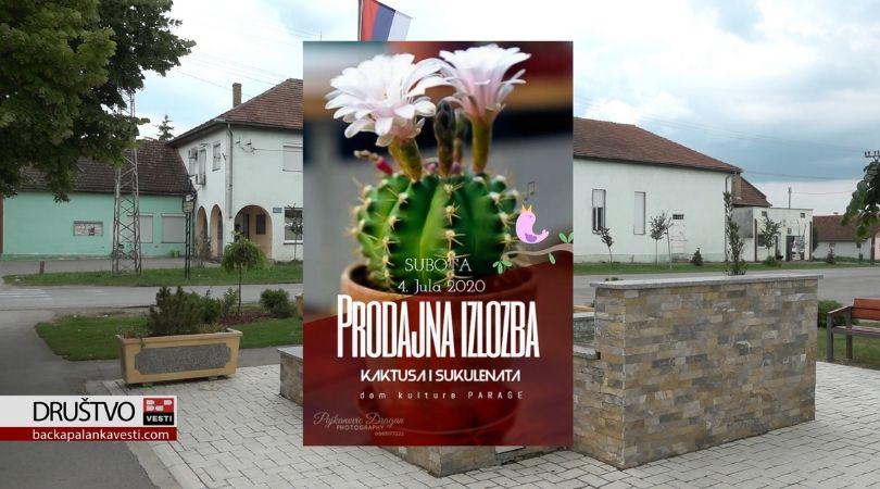 Izložba kaktusa i sukulenata po drugi put u Paragama (VIDEO)